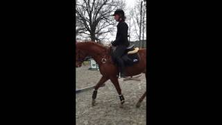 Jet 2012  16.1h Thoroughbred Gelding