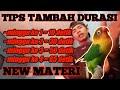 Cara Menambah Durasi Ngekek Lovebird Untulan Maupun Single  Mp3 - Mp4 Download