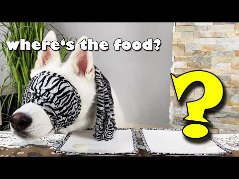 Dog CHOOSES BLINDFOLDED between two Kind of Food!