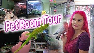 Pet Room Tour | 2018 Update