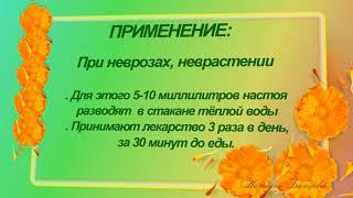 КАЛЕНДУЛА 2