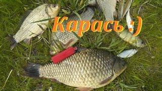 Летняя Рыбалка, Ловля Карася, Видео Отчет
