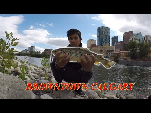 Fishing The BOW RIVER, DOWNTOWN CALGARY