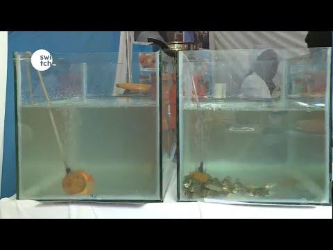 BLUE ECONOMY FISHERIES