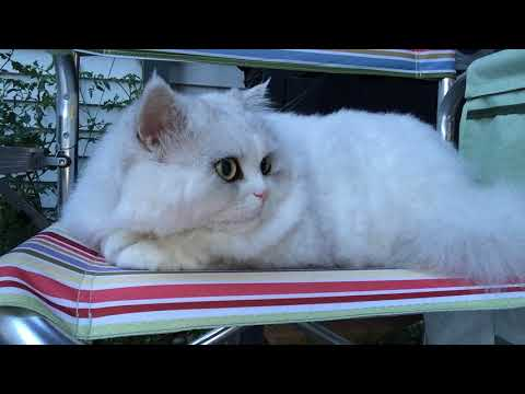 SUSHI the cat Cutest cat ever 5