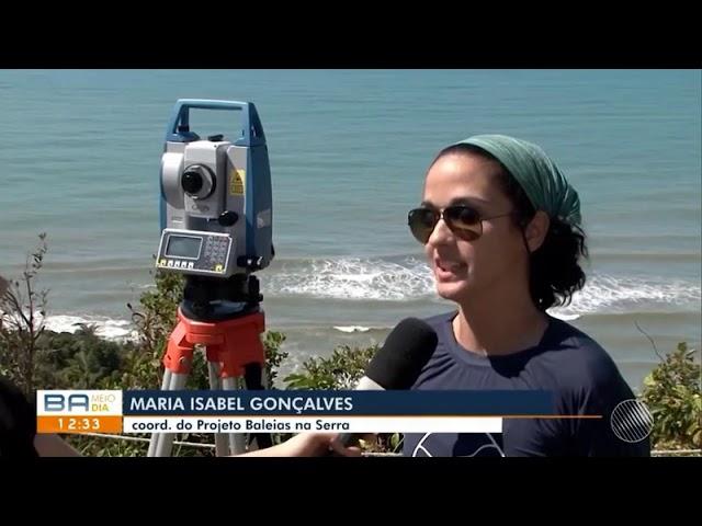 Observação de baleias por pesquisadores e turistas é tema de reportagem no Bahia Meio Dia