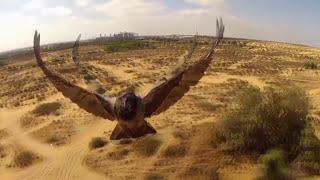 5 Самых Крутых и Пикантных Видео, Снятых Квадрокоптером