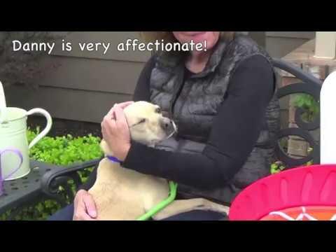 Adopt Danny Boy! 2 year Italian Greyhound Mix!