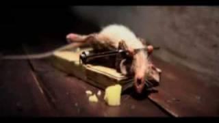 En liten mus!!!!