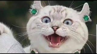 Приколы про котов Добрый позитив Видео про котов Кошки Животные Создай себе хорошее настроение