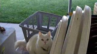 Cat Jumps into screen and gets stuck