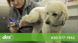 Purrfurred Pet Styling Mobile Grooming - West Chicago Suburbs