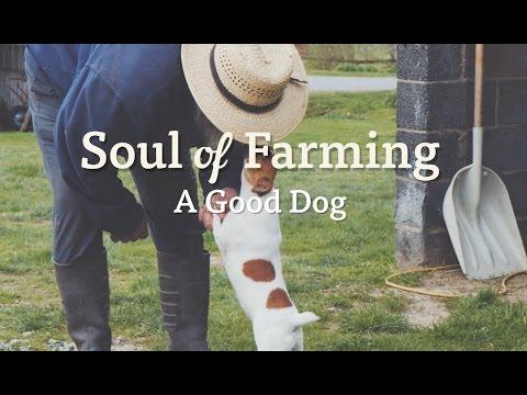 Soul of Farming - A Good Dog