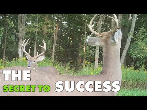 The Secret To Deer Hunting Success