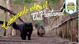 El acceso más fácil al Pantanal | Estrada Parque Pantanal | Episodio #64 | Brasil