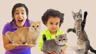 Kedilere Süt İçirdik سوسو يريدوا نفس القطة