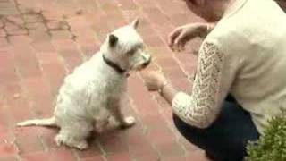 How To Train Your Dog To Shake Hands