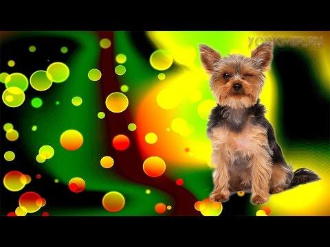 У собаки понос желтого цвета: лечение, причины, профилактика