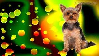 Рвота у собак | Причины | Лечение | Что делать.