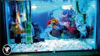 Efek Suara - Gelembung Air di Aquarium