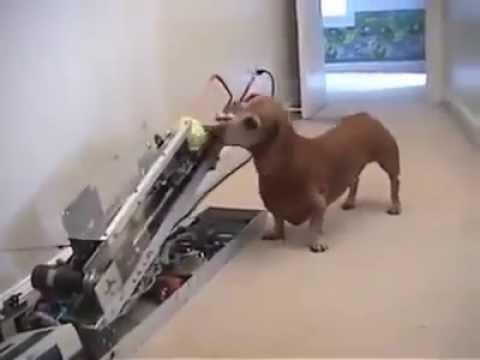 Chú chó thông minh nhất thế giới