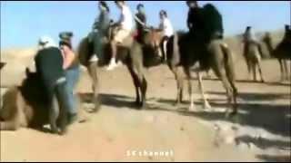 Толстого русского мужика пытаются посадить на верблюда!! Египет! Верблюд не выдерживает его массу!