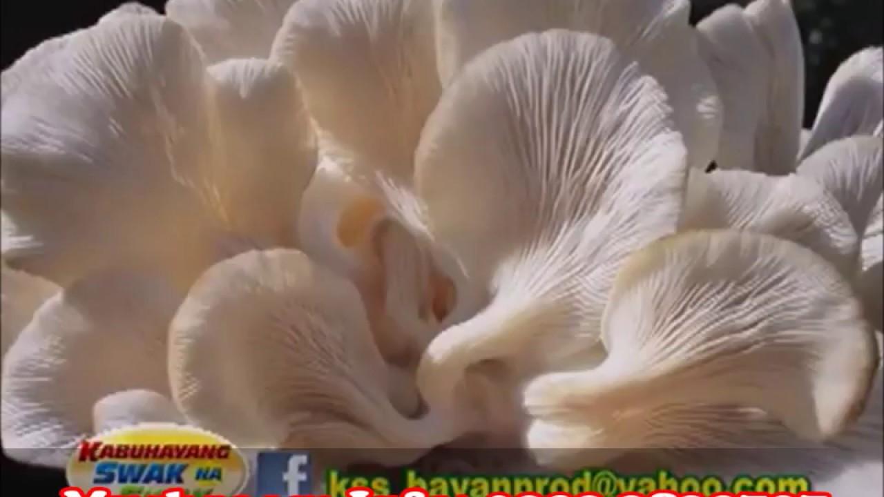 JMP Mushroom