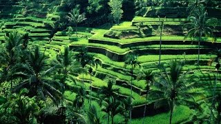 tanah-lot-temple-bali Things To Do In Bali Indonesia Top Attractions Travel
