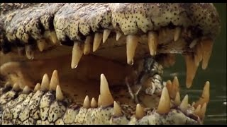 Crocodiles - Man vs. Crocodile | Explora Films EN