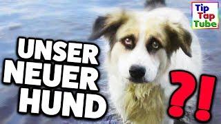 Unser neuer Hund? TipTapTube