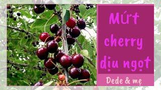 Tự làm mứt cherry đơn giản không phụ gia/Mẹ Dede làm bếp/ Homemade cherry jam without pectin