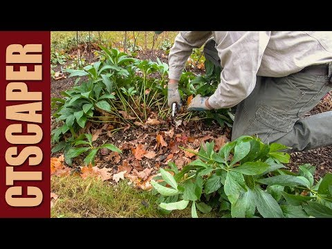 HOW TO CUT BACK PERENNIALS IN THE FALL