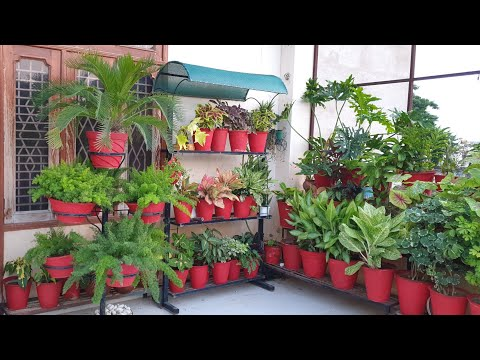 Gardening Mistakes that All Gardeners Make – Part 1 || These Mistakes are Killing your Plants