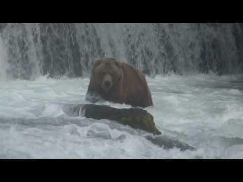 Katmai National Park - The Bears