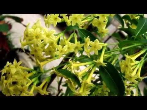 Flowers in Thailand ดอกไม้ไทย