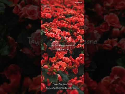 rose-day-special-|-aesthetic-status-|-jashne-bahara-hai-status-|-viralknife-|