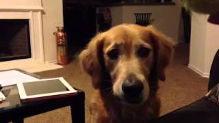Ball Crazy Dog Eyes