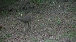 Florida Deer Season 2017.