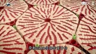 【發現】精華影片 - 20140111 - 人體奧祕系列 - 人體的超級工廠 - 肝臟