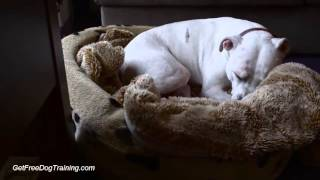 How to Crate Train an Adult Dog - Tips Crate Training Older Dog