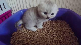 ЛУЧШИЕ ВИДЕО ПРО КОТЯТ 2019 😻 МИЛЫЕ КОТЯТА БЕСЯТСЯ И РЕЗВЯТСЯ Кошки скоттиш фолд Cute Kittens  Cat