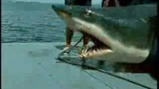 Fishing A Shark With Surprising Content