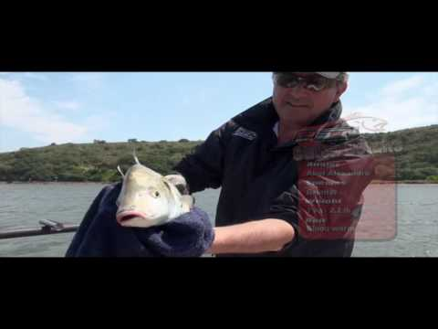 ASFN Estuary - Catching Grunter at the Breede River
