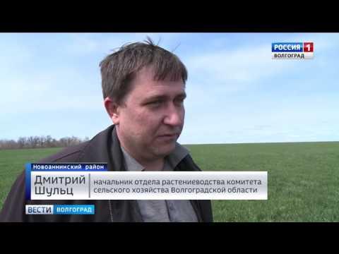Аграрии Новоаннинского района готовы к севу яровых