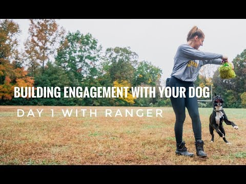 First Step of Dog Training: Building Engagement