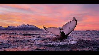 ПОДВОДНЫЙ МИР НОРВЕГИИ.Wild Fishing Norway.Фильм Андрея Щукина