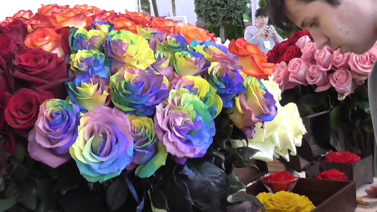 Фото выставок цветов голландии 3