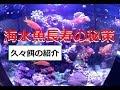 【海水魚】長生きの秘策を考えました(5年目のドリ―など)