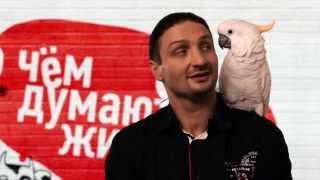 Кот против быдло-попугая