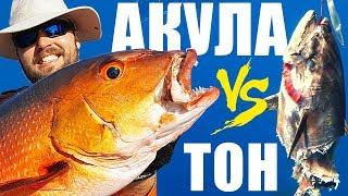 Риболов на морски костур Snapper АКУЛА изяжда риба ТОН!!! Seychelles fishing Shark Attack